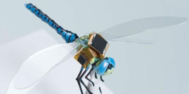 Découverte d'un nouveau mini-robot contrôlable à distance: la libellule cyborg